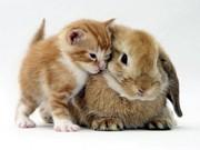 Кролики декоративные для разведения